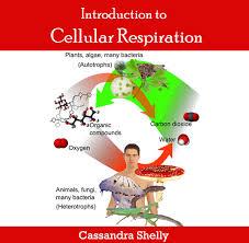 Discuss on Cellular Respiration
