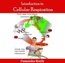 Define and Discuss Cellular Respiration