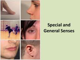 Presentation on General and Special Senses