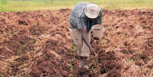 Finding the Best Crop Fertilizer Supplier for the Perfect Crop