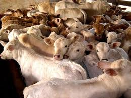 Discussed on Goat Cattle Farming