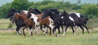 Discussed on Performance Of Farm Horse