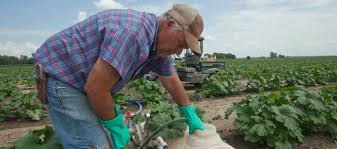 Protect the Farm with Crop and Farm Insurance