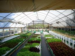 Explain Benefits of Aquaponic Farming