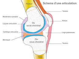Lecture on Articulations