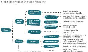 Lecture on the Functions of Blood