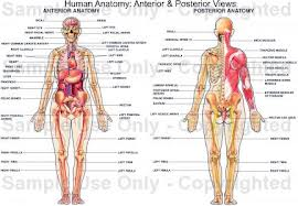 Lecture on Introduction to Human Anatomy