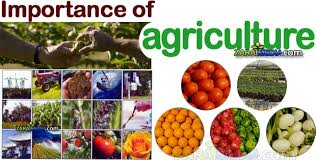 Discuss on Importance of Agriculture