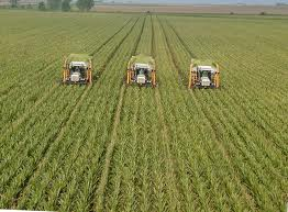 Define and Discuss on Monoculture Farming