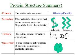 Lecture on Prediction of Protein Structure