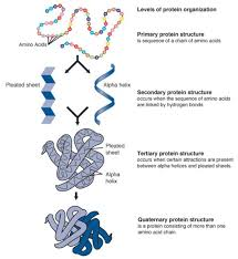 Lecture on Genetic Control of Protein Structure