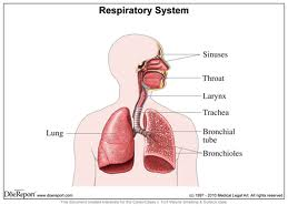 Lecture on The Respiratory System