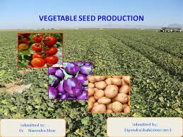 Discuss on Importance of Seed Production