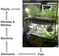 Discuss on Advantages of Small Aquaponics