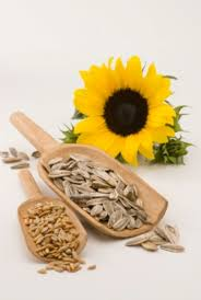 Sunflower Seeds Benefits and Machine Operating Tips