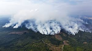 Discuss on Forest Fire Investing