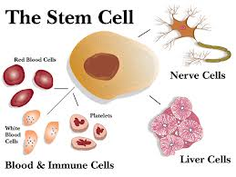 Stem Cells in Skin Development and Skin Disease