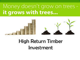 Define and Discuss on Timber Investment