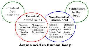 Analysis Benefits Amino Acids