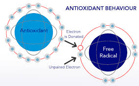 Basics of Antioxidant