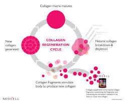 Define Collagen Supplements