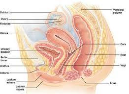 Explain Medical Gynecology Transcription