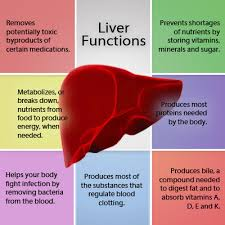Importance of Liver Function