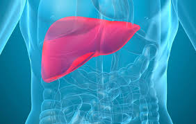 Basic Ways to Keep Liver Healthy
