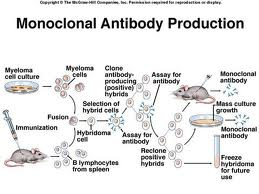 Monoclonal Antibodies Treatment for Various Diseases