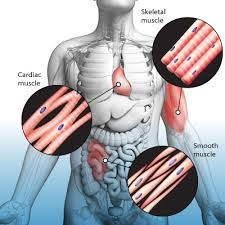 Causes and Treatment of Muscle Spasms