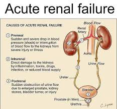 Main Symptoms of Renal Problems