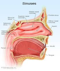 Identify Sinus Infections