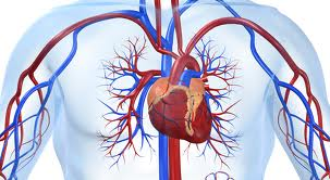 Atherosclerosis Treatment by Vascular Surgery