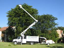 The Significance of Tree Removal Service