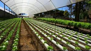Fight World Hunger With Hydroponic