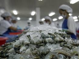 Shrimps Export from Bangladesh