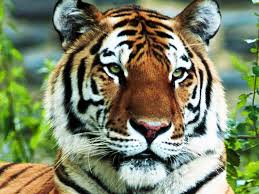 Wildlife Conservation in Bangladesh