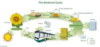 Basics of Biodiesel