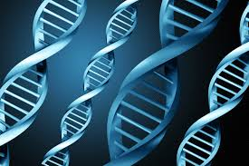 Define on DNA Genetic Testing