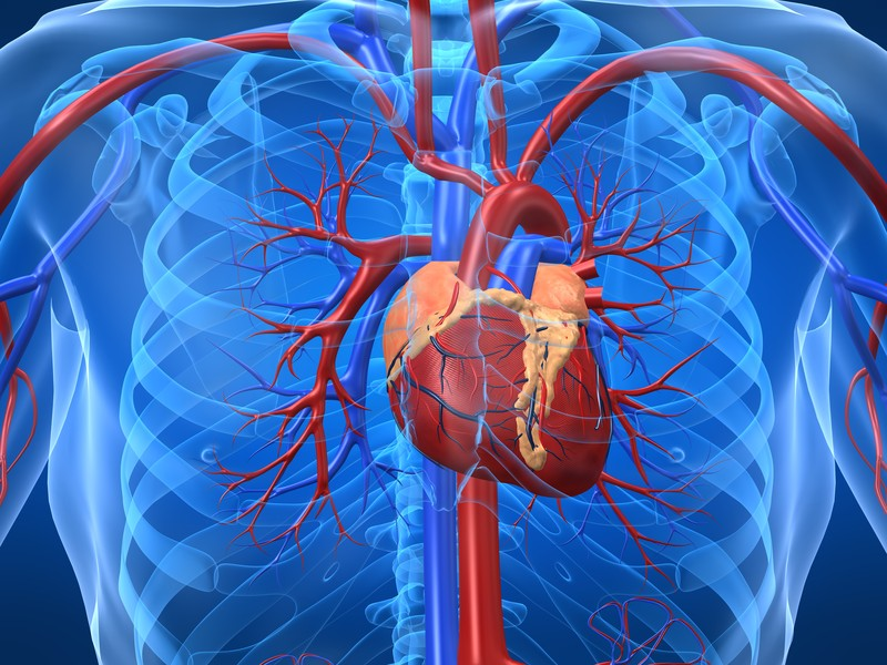 Symptom and Treatment of Heart Disease