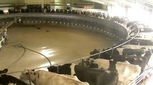 Modern Dairy Farms