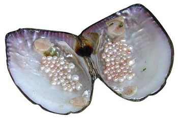 Commercial Value of Freshwater Pearl