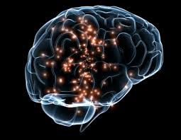 Listed Functions of Brain