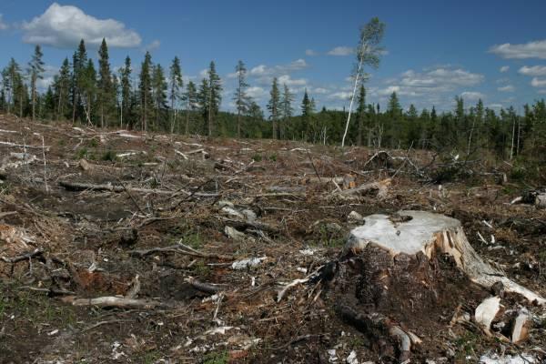 Term of Deforestation