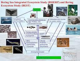 Ecosystem Investigation