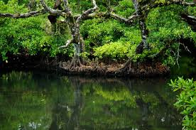 Mangrove a Forestation Project