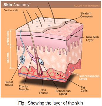 Surgical Anatomy of the Skin