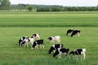 Benefits of Dairy Farming