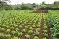 Organic Vegetable Farming