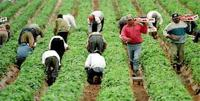 Agricultural Jobs